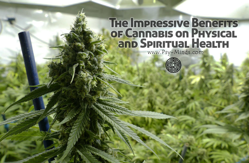 Impressive Benefits of Cannabis