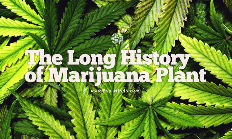 The Long History of Marijuana Plant