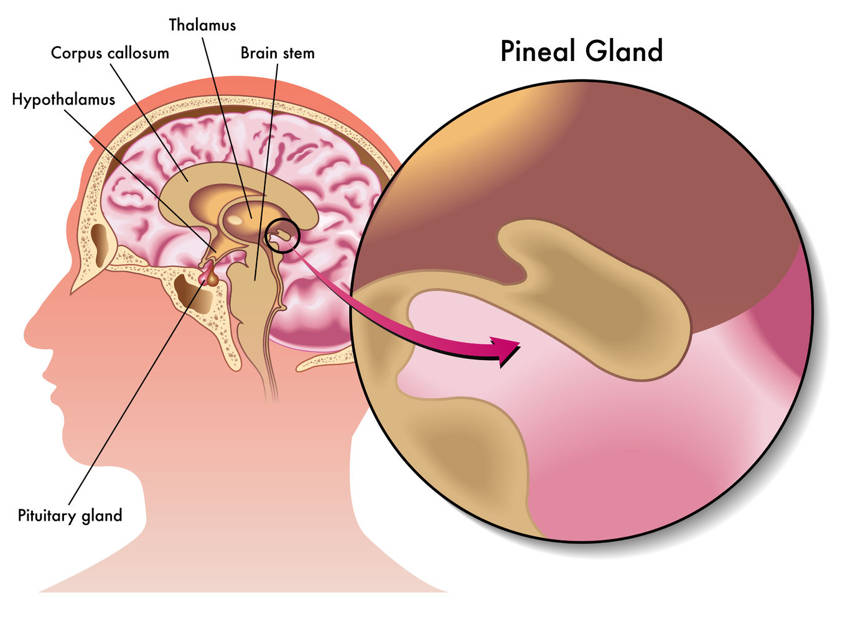 Pineal Gland Is it Really The Seat of the Soul1