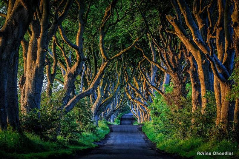The-Dark-Hedges-Ballymoney-Northern-Ireland fairy tale