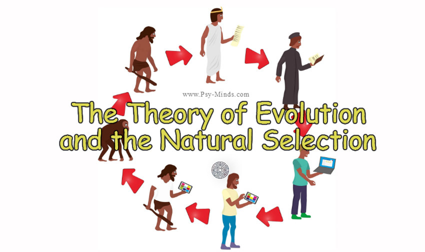 The Theory of Evolution and the Natural Selection