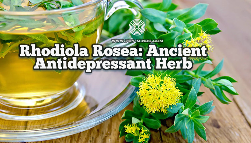Rhodiola Rosea Ancient Antidepressant Herb