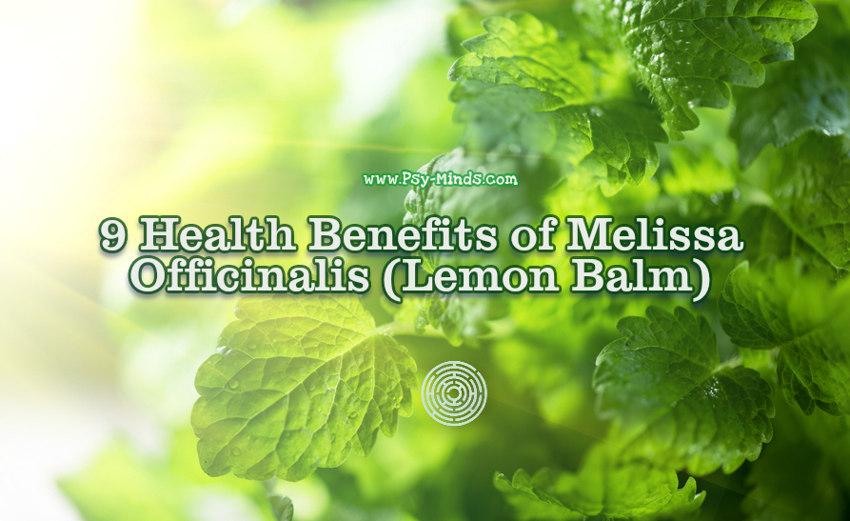 9 Health Benefits of Melissa Officinalis (Lemon Balm)