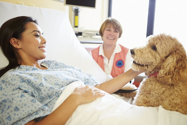 The Benefits of Pet Therapy dog