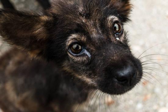 Stray Animal puppy