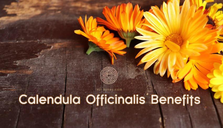 Calendula Officinalis Benefits