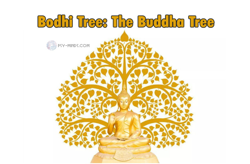 Bodhi Tree The Buddha Tree