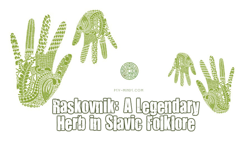 Raskovnik A Legendary Herb in Slavic Folklore