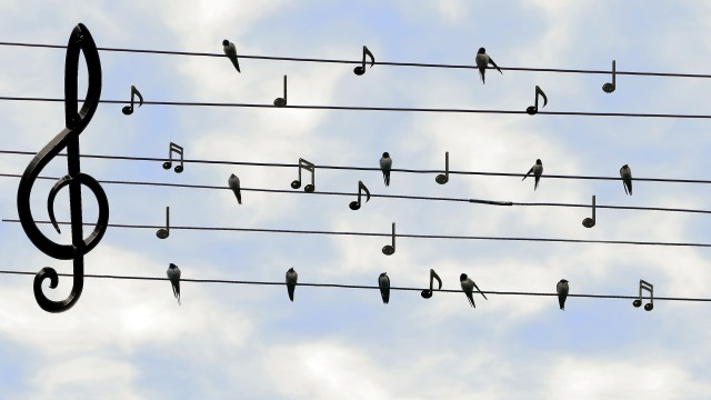 Picture of bird on electrical wires with music key