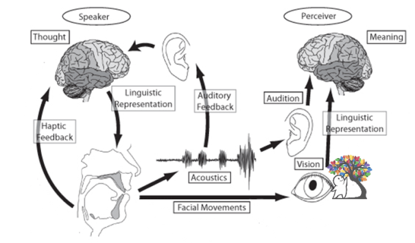 a diagram of how speech works in the mind with the brain and other components such as ears and articulators