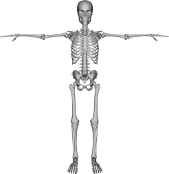 skeleton-with-arms-out
