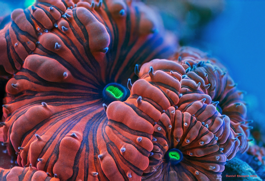 Fluorescent coral under high magnification