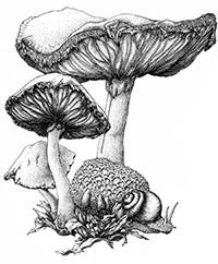mushroom_ink_small
