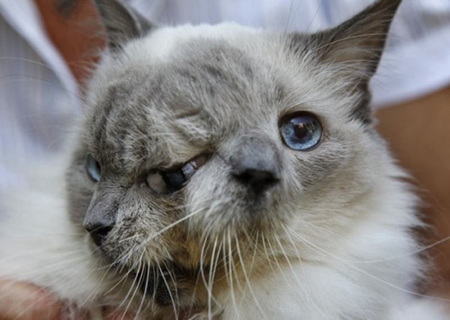 Janus Cat