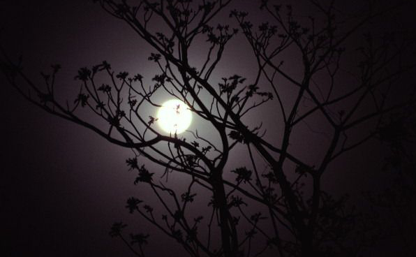 moonlit-shadow-night-trees
