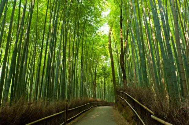 arashiyama-bamboo-grove-japan