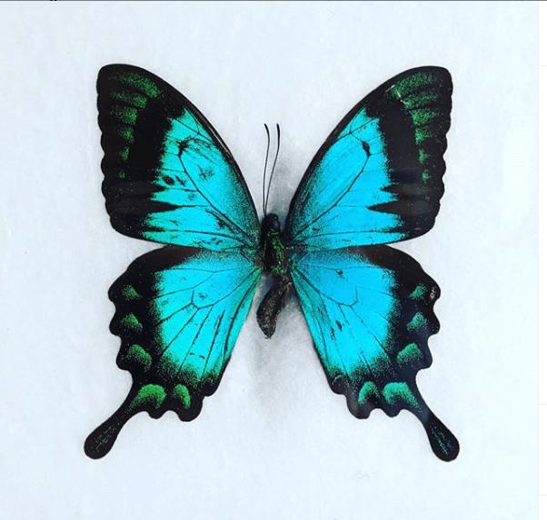Butterfly © Psychic Readings by Brandi
