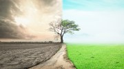 Half drought and half abundance tree standing landscape background