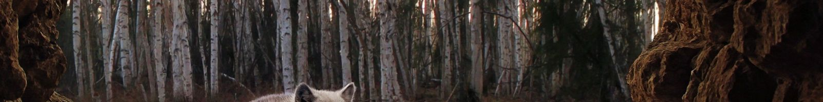 Le loup de Sharmardir : Conte psychologique
