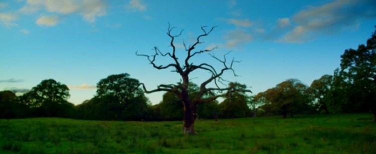 04_KILLING_TREE