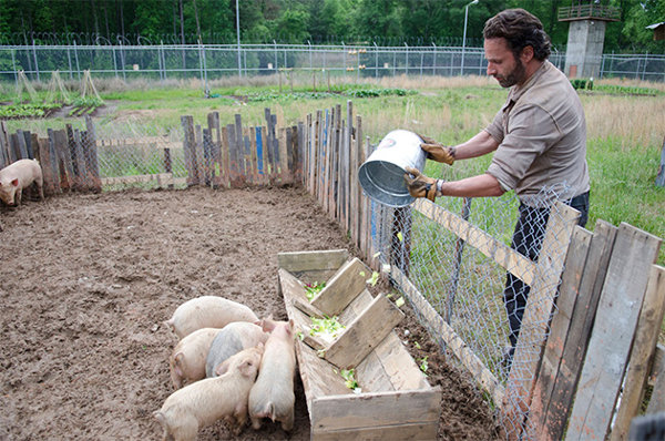 TWD402_Pigs