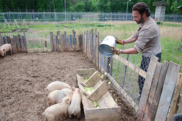 TWD402_Pigs