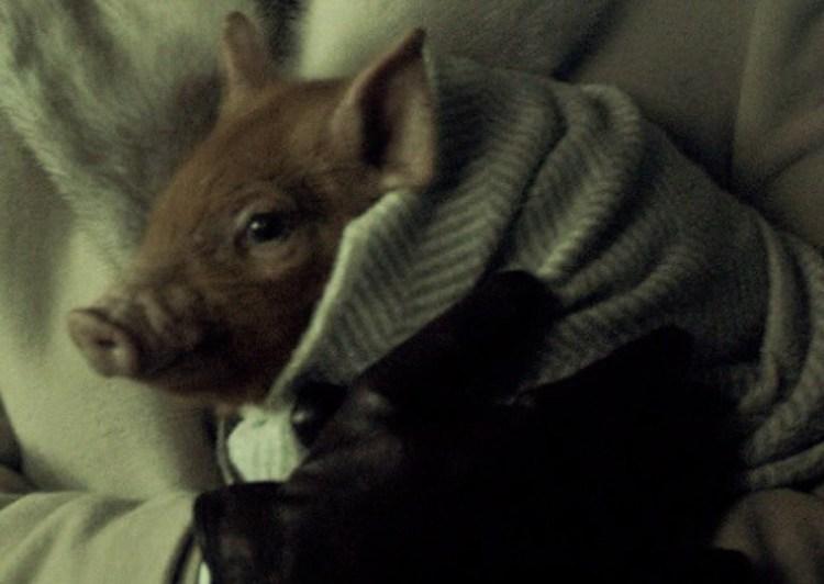 Hannibal210-Piggie