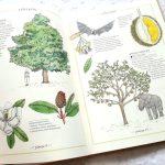 """20180723_201807-1427058383 Dom Montessori –Książka """" Ilustrowany Inwentarz drzew """" - Zakamarki"""