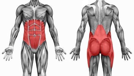 quels-sont-les-muscles-de-base