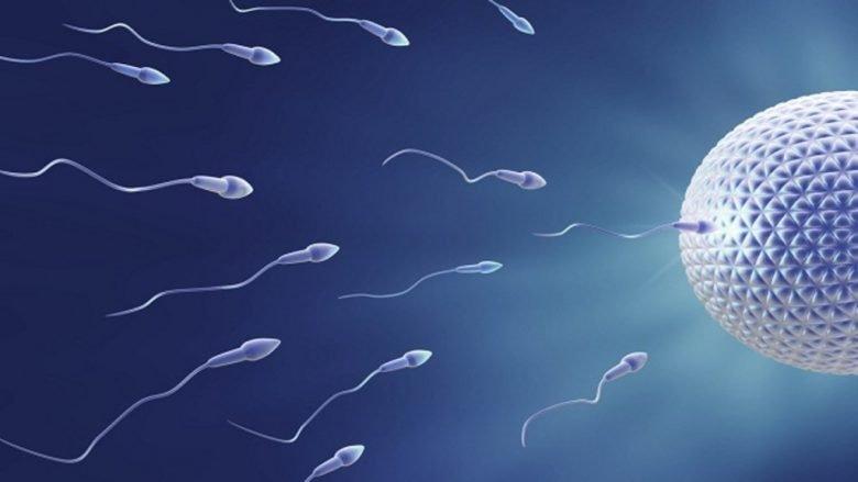 Qu'est-ce que le sperme ? Rôle et physiologie du liquide séminal 1