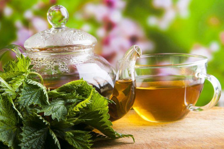 Tisane d'ortie : 11 avantages étonnants pour la santé 1