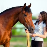 夢占い 馬