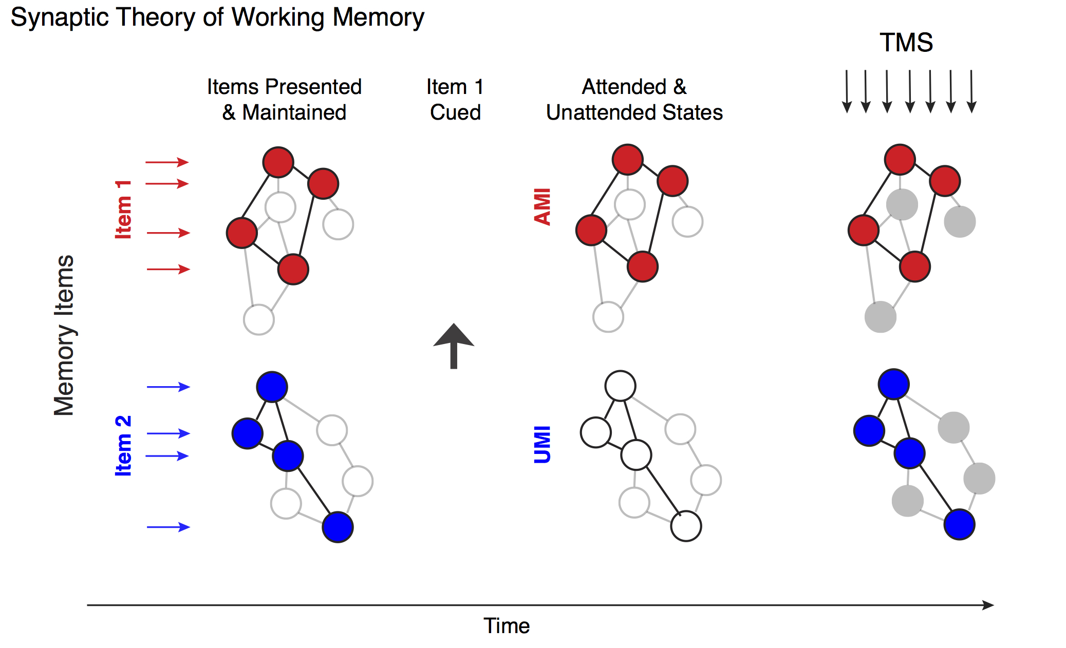 New faculty member's research on working memory published