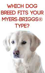 dog breed mbti