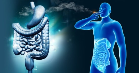 How cannabis can affect the digestive system in both positive and negative ways - Sensi Seeds blog