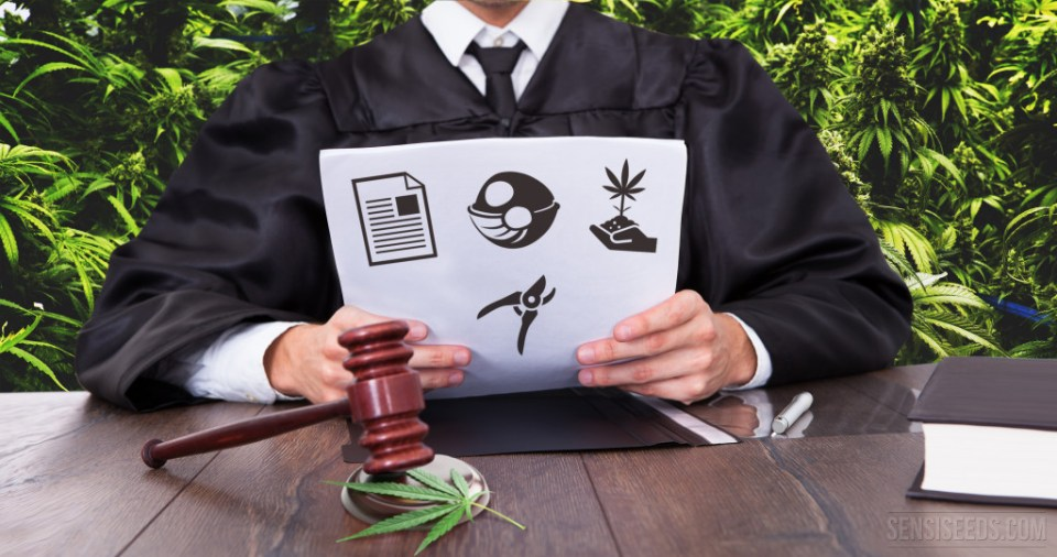 12 points to consider in a legal growing operation - Sensi Seeds blog