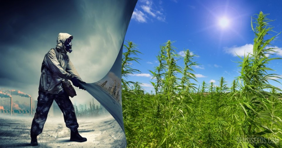 is hemp the best biofuel