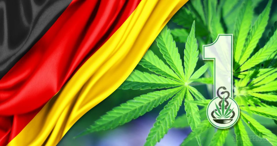 First cultivation permit for medicinal cannabis in Germany