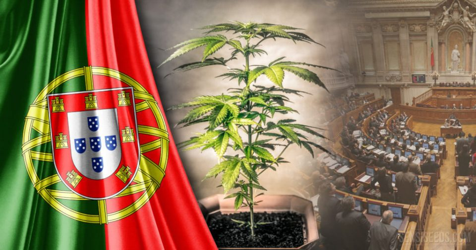 Legal Status of Cannabis in Portugal