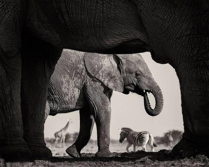 Fotos de Animais