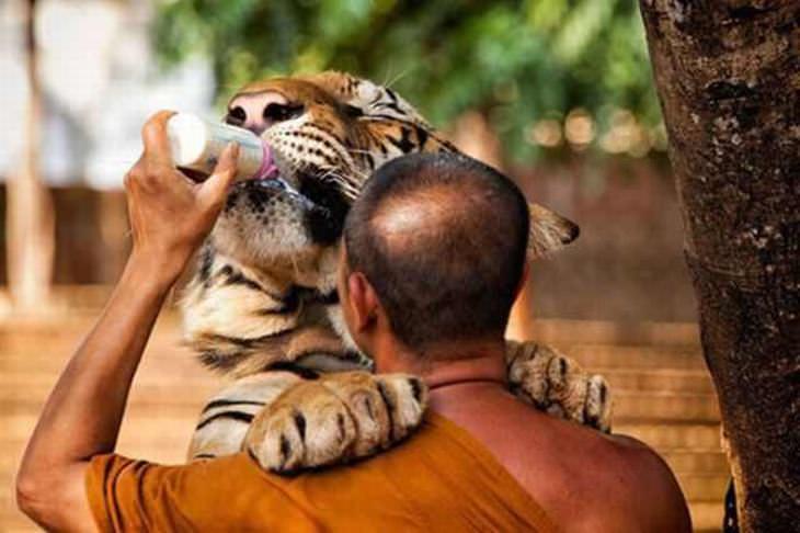 bondade do ser humano