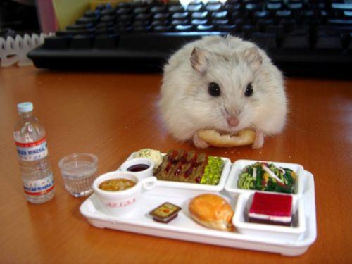 Ratinhos fofos