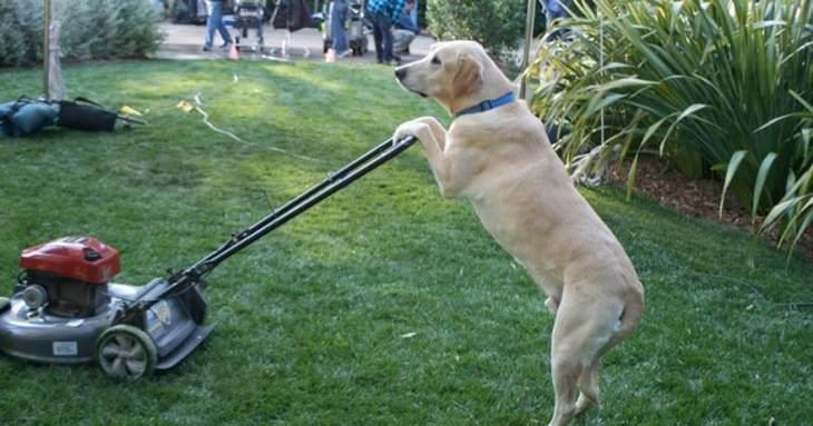 15 cães que pensam que são humanos!