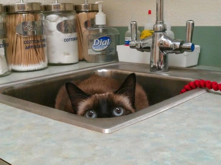 14 Gatos Visitando o Veterinário