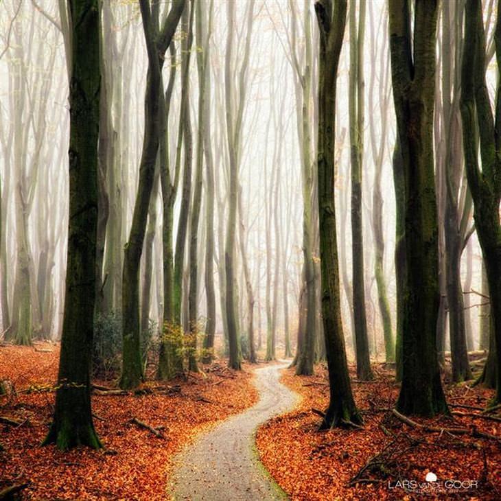 28 caminhos pela floresta que mais parecem conto de fadas