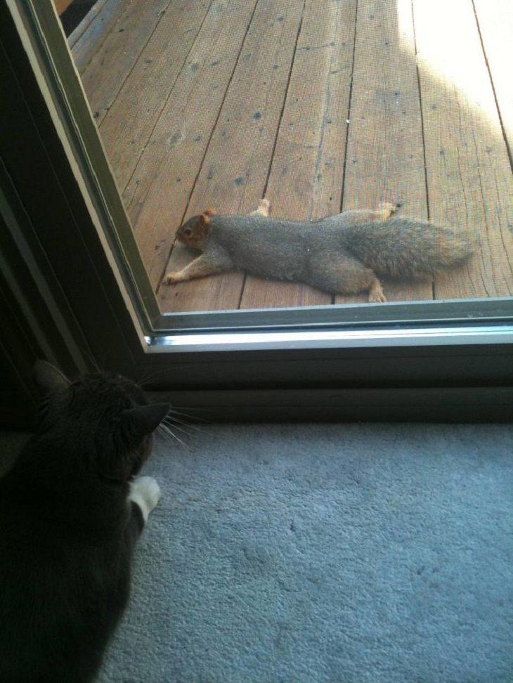 animais em situações inusitadas