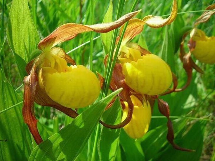 11 Espécies de flores ameaçadas de extinção