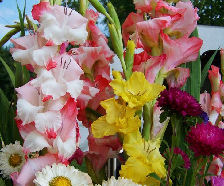 o significado das flores