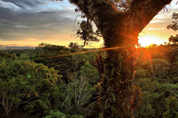 A diversidade das florestas do planeta