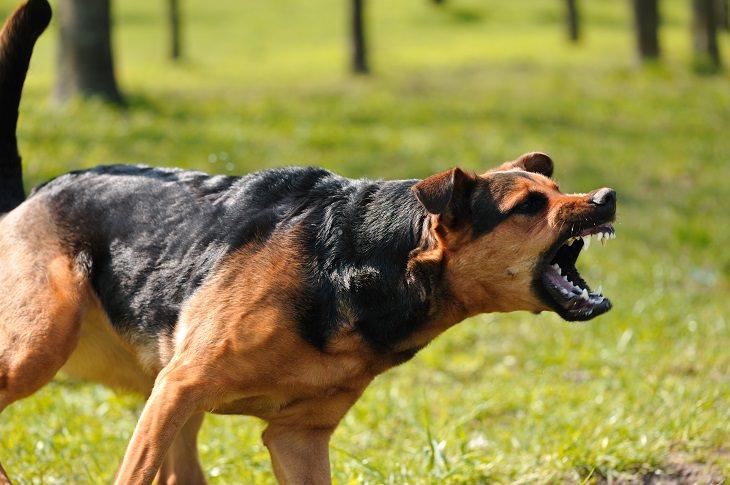 O que fazer quando um cão te ataca?